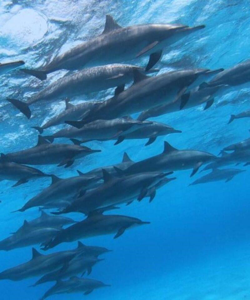Mar Rojo - Viajes GoPro
